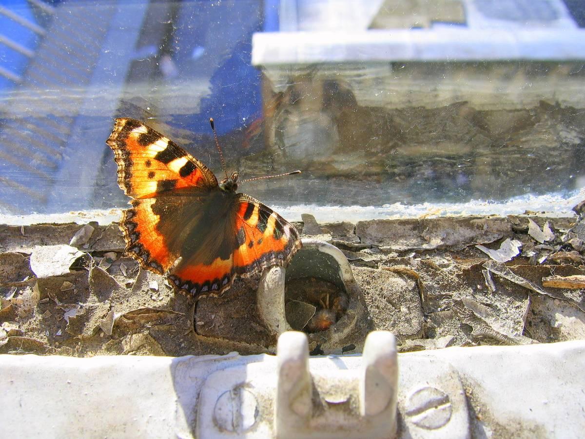 Butterfly in decay