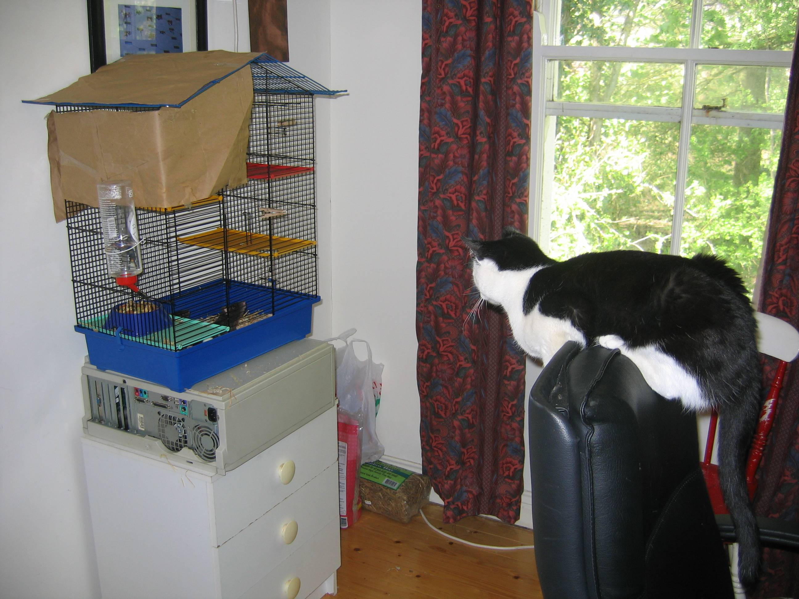Jack watches the rats