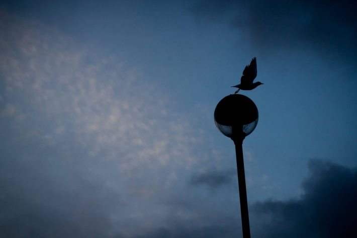 Gull taking off - a photo by Alex Leonard