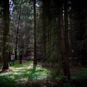 Forest walk - A photo by Alex Leonard